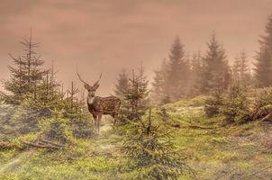 Заставки олень, лес, ёлки, природа, животные