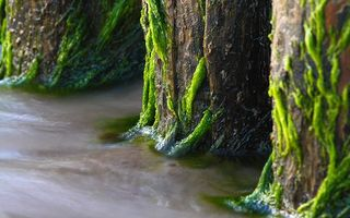 Photo free water, logs, piles