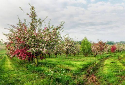 Бесплатные фото поле,сад,деревья,цветение,пейзаж
