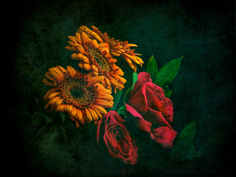 Обои розы, герберы, цветы, букет