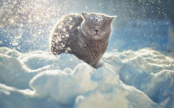 Фото бесплатно кот, морда, шерсть