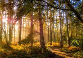Бесплатные фото осень, лес дорога, деревья, природа, пейзаж