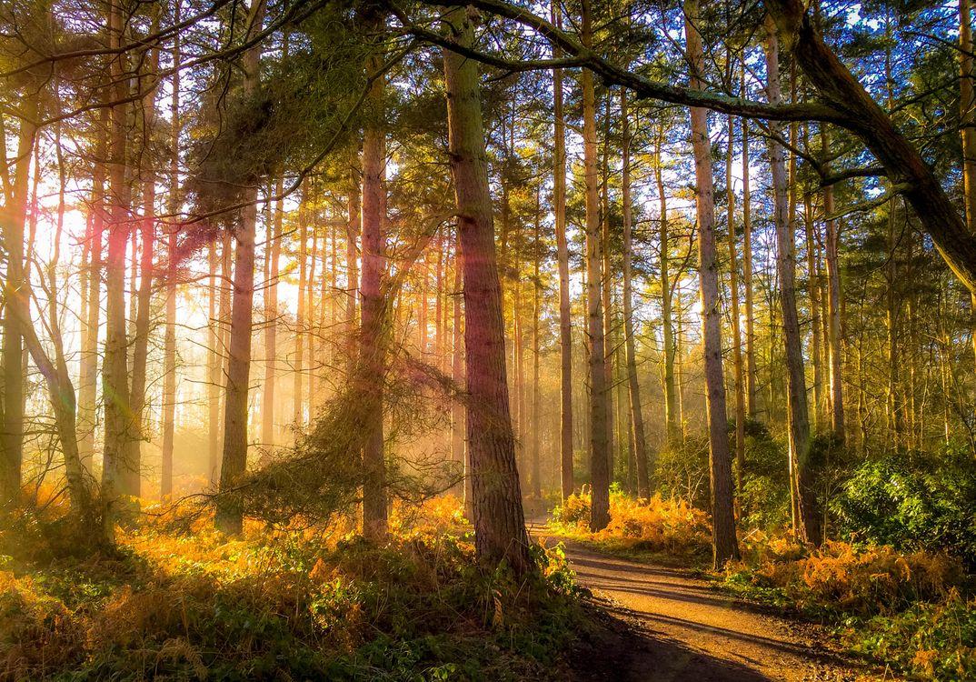Фото бесплатно осень, лес дорога, деревья, природа, пейзаж, пейзажи