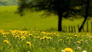 Фото бесплатно поляна, трава, одуванчики, цветочки, деревья, ограда