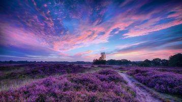Бесплатные фото закат, поле, тропинка, цветы, лаванда, пейзаж