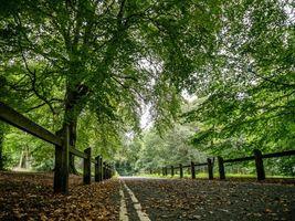 Заставки дорога, лес, деревья