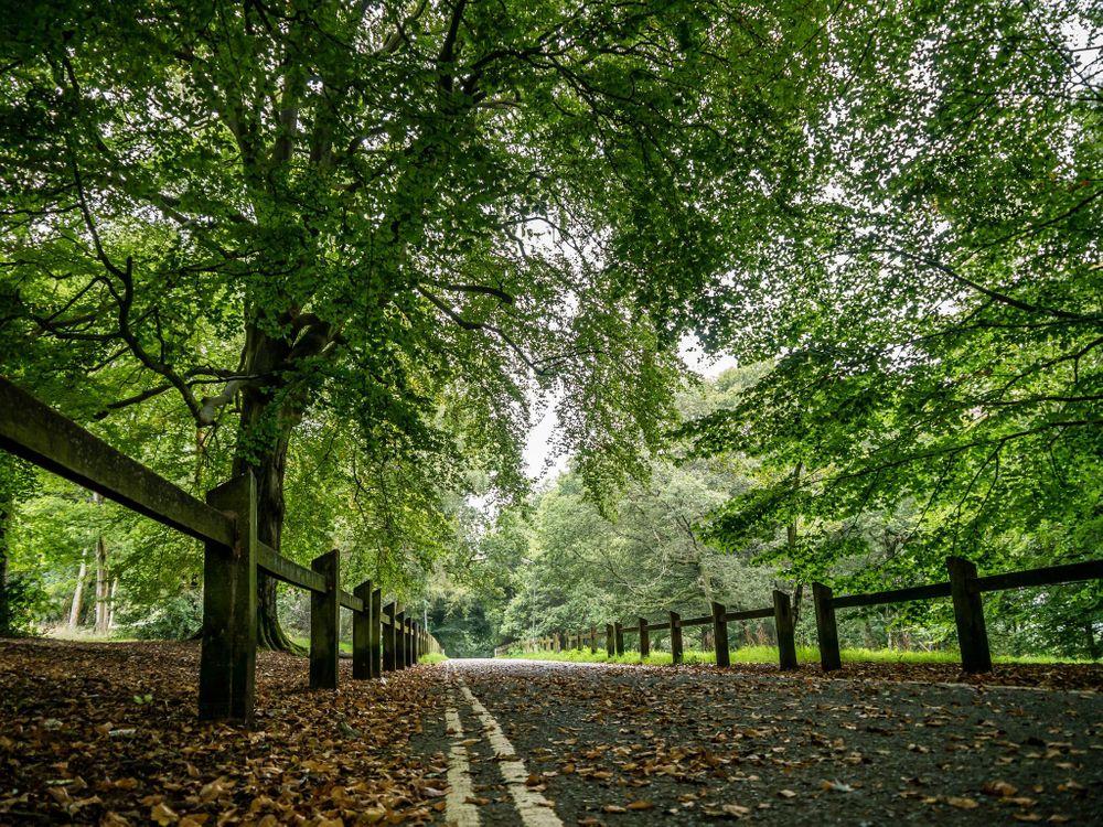 Фото бесплатно дорога, лес, деревья, забор, природа, природа