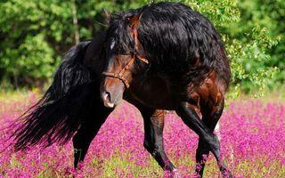 Бесплатные фото лошадь,конь,грива,хвост,природа,деревья,трава