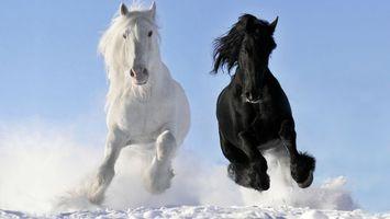 Заставки зима, кони, лошади, черный, белый, гривы, морды, бег, снег