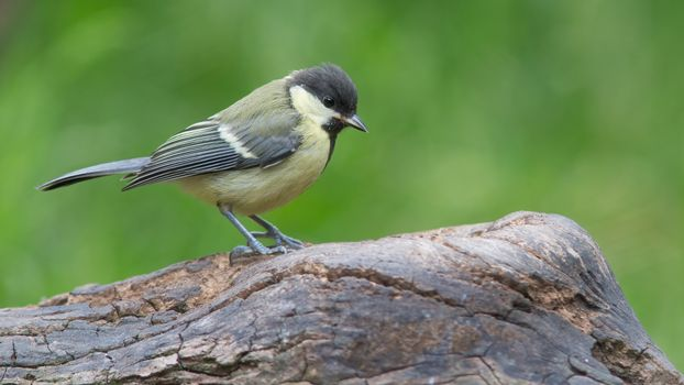 Фото бесплатно птица, птицы, цыплёнок