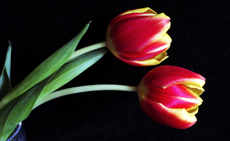 Два цветка открытки, прикольная днем влюбленных