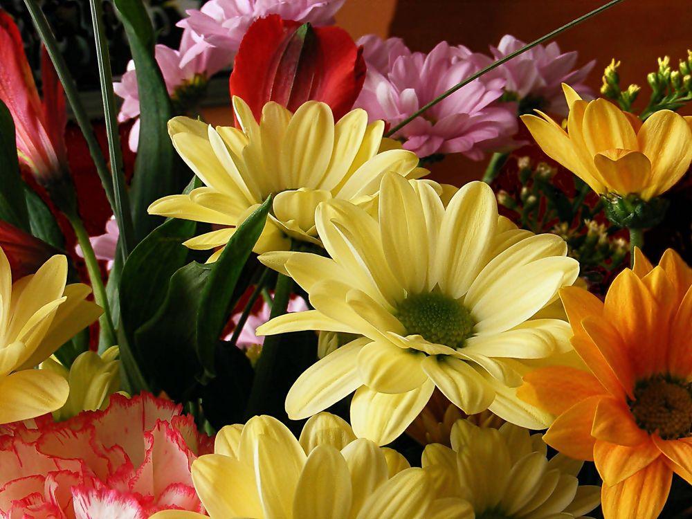 Фото бесплатно цветы, букет, флора, цветы