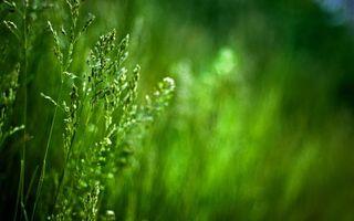Фото бесплатно трава, зеленая, кисточки