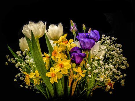 Screensaver flora, flowers free download