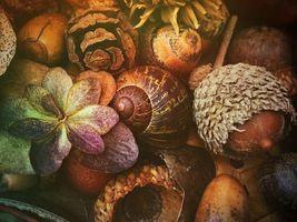Бесплатные фото Композиция,жёлуди,ракушка,растение