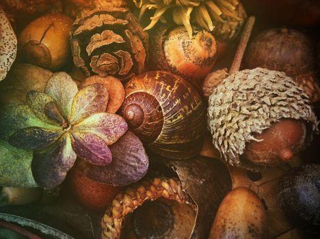 Photo free Composition, acorns, shell