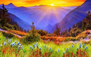 Бесплатные фото трава,цветы,деревья,горы,небо,солнце,закат