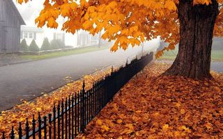 Фото бесплатно листва, металл, дома
