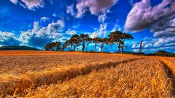 Бесплатные фото поле,колосья,деревья,небо,облака,пейзаж