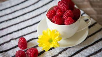 Фото бесплатно цветок, малина, чашка