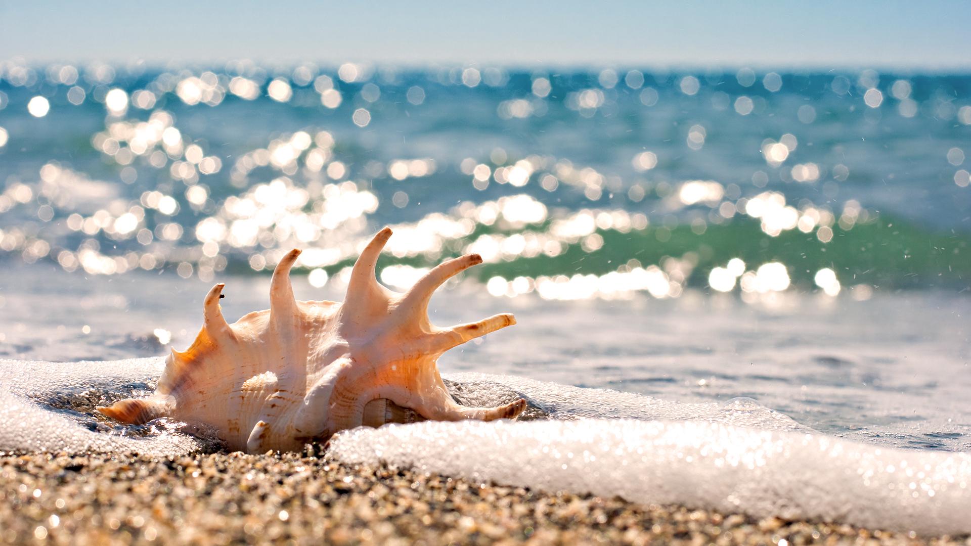 обои для рабочего стола морской песок № 833543 без смс