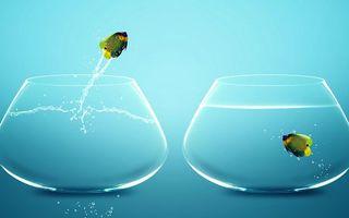 Фото бесплатно аквариумы, вода, рыбки, прыжок, брызги