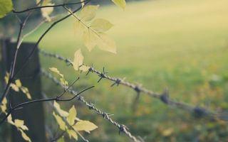 Заставки ограждение, забор, колючая проволока