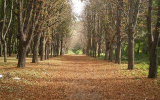 Фото бесплатно парк, дорожка, листва