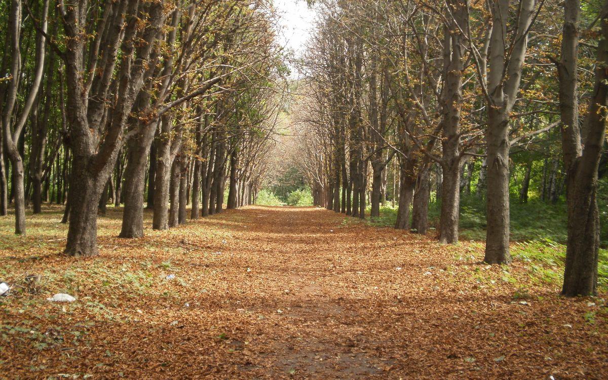 Photos for free park, path, foliage - to the desktop