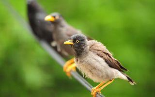 Бесплатные фото птицы,клювы,крылья,хвост,перья,лапы,провод