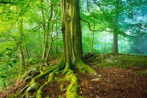 Бесплатные фото Мэтлок,Великобритания,лес,деревья,природа,пейзаж