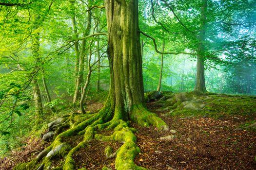 Фото бесплатно Мэтлок, пейзаж, лес