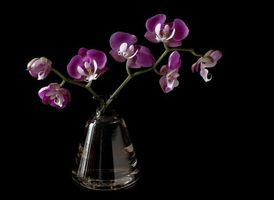 Фото бесплатно Орхидея, ваза, цветок