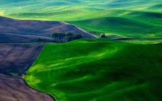 Бесплатные фото холмы,поля,пахота,всходы,деревья,дорога