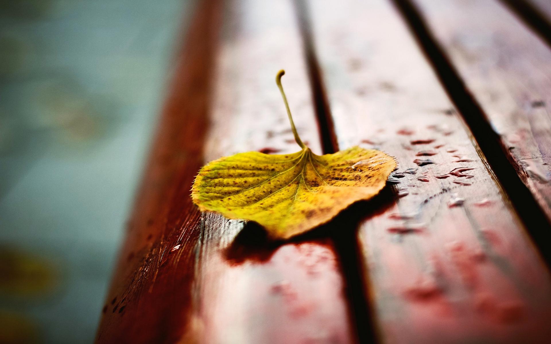 Осень листья лавка стол  № 3187388 без смс