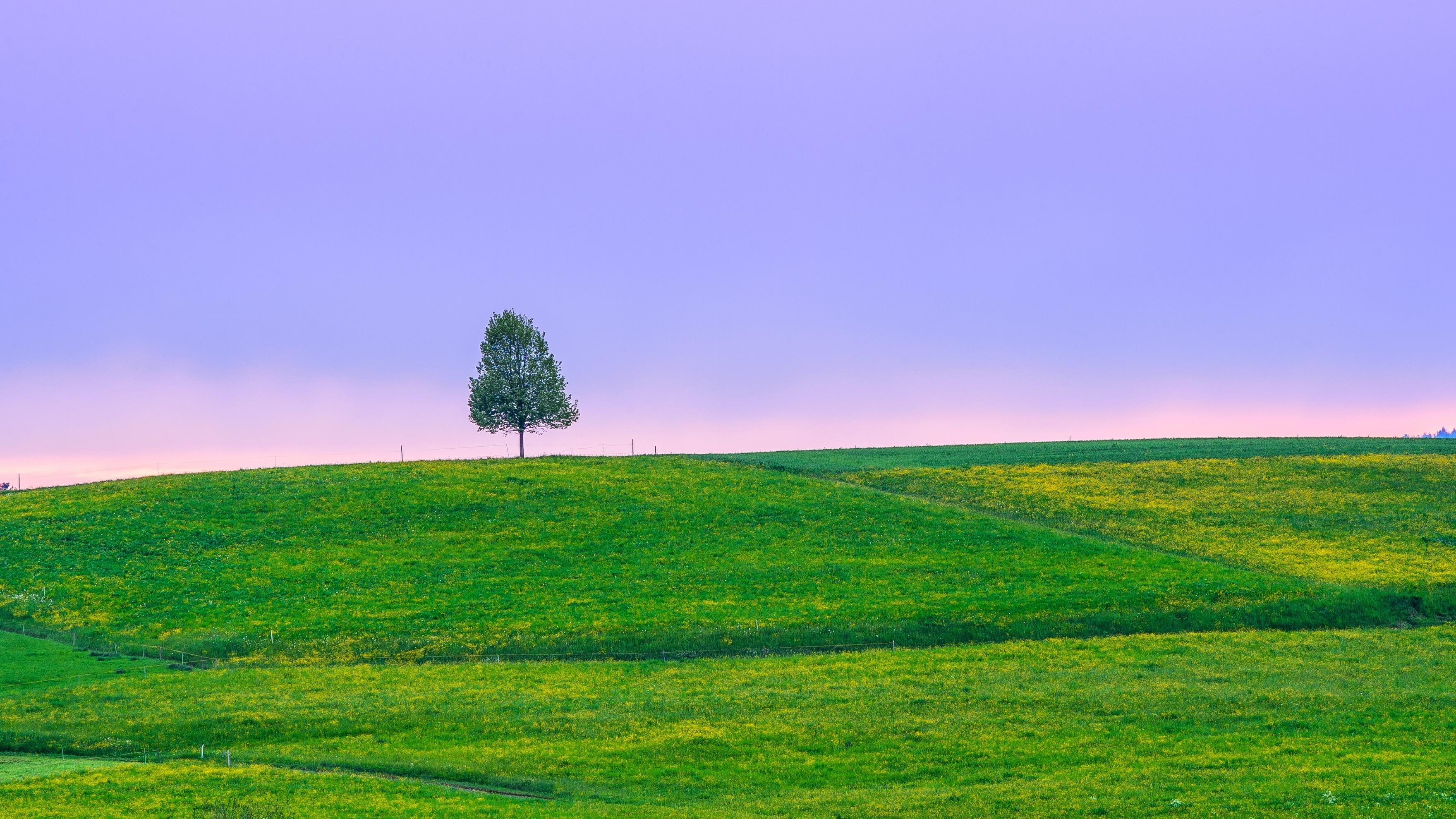 Закат дерево поля холмы  № 2965401  скачать