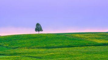 Бесплатные фото закат, поле, холмы, дерево, пейзаж