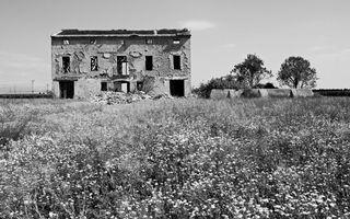 Бесплатные фото дом,развалины,деревья,трава,заросли,фото,черно-белое