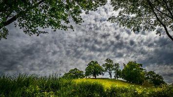 Фото бесплатно поле, холм, деревья