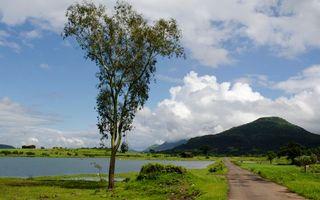 Бесплатные фото дорога,дерево,трава,река,горы,небо,облака