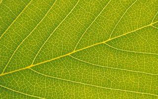 Бесплатные фото лист,зеленый,прожилки,узор,структура,макро
