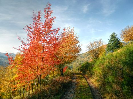Picture free autumn, landscape desktop