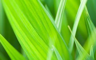 Бесплатные фото трава, зеленая, сочная, листья, прожилки, макро