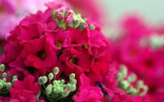 Фото бесплатно цветочки, лепестки, розовые, бутоны