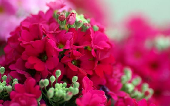 Фото бесплатно цветочки, лепестки, розовые
