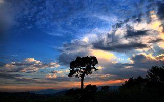 Бесплатные фото вечер,дерево,макушки,небо,облака,закат