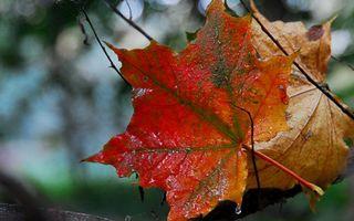 Заставки ветви,листья,прожилки,капли,вода