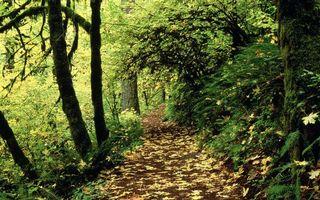 Бесплатные фото лес,деревья,кустарник,листва,трава,тропинка