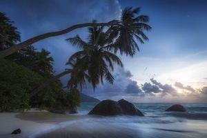 Бесплатные фото море,океан,волны,закат солнца,Пальма,деревья,пляж