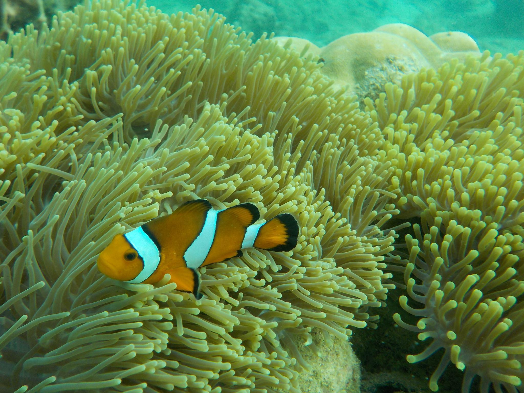 обои морское дно, подводный мир, водоросли, рыба картинки фото